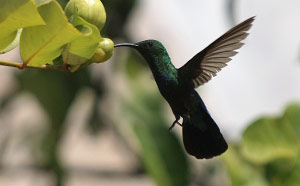 Home. hummingbird-1